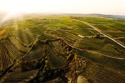 Vinmarker i Østrig